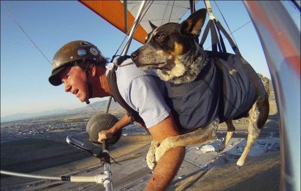 Полеты с собакой на